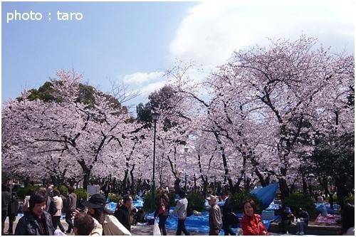 お花見@鶴舞公園~4月~